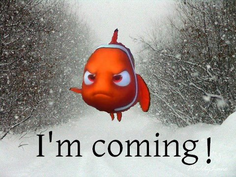 Nemo's coming – are you ready?